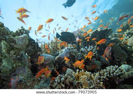 Coral scene on the reef - stock photo