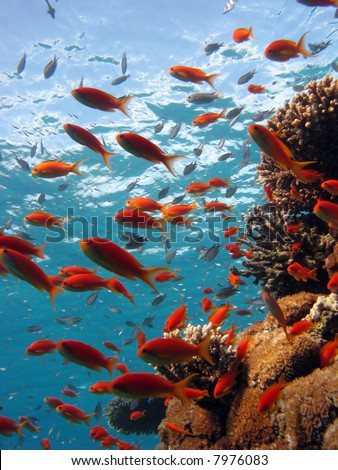 Coral Scene. shot in the Red Sea 17/12/2007 - stock photo
