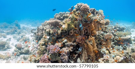 Coral scene with gorgonian coral - stock photo