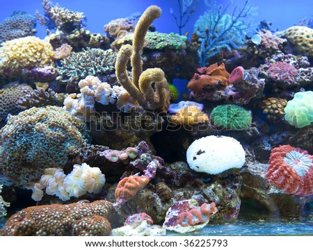 Coral, sea anemones, and other colorful life inside a large saltwater aquarium