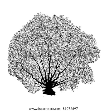 Sea Fan Stock Images Royalty Free Images Amp Vectors