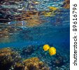 coral shallow with glossy water surface and yellow fish - stock photo