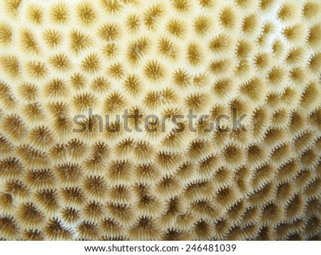 Coral texture in red sea - stock photo