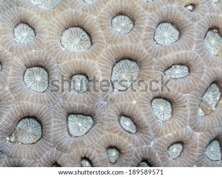 Coral texture in Red sea, Egypt, Hurghada - stock photo