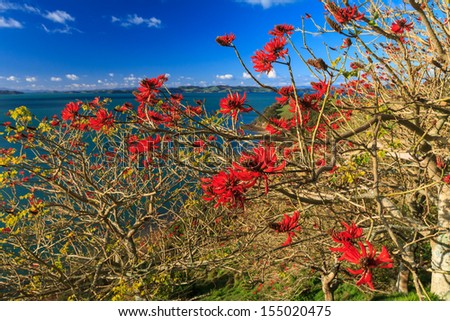 Coral Tree, Duder Regional Park, Auckland, New Zealand - stock photo