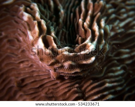 Coral Underwater In Indonesia
