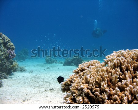 Coral with diver in background - stock photo