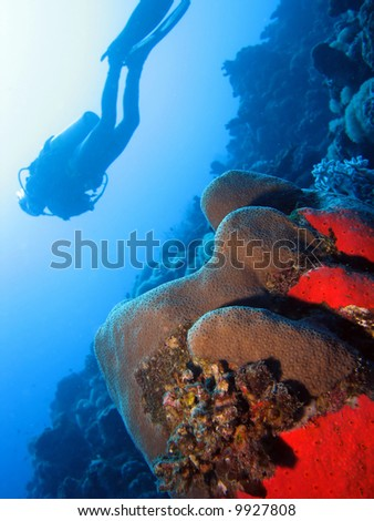Coral with diver in the background - stock photo