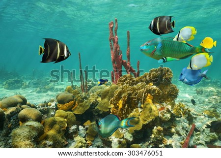 Corals and colorful tropical fish under the water on a shallow seabed of the Caribbean sea - stock photo