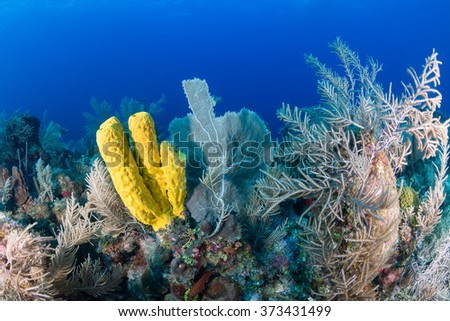 Corals and sponges on a tropical reef - stock photo