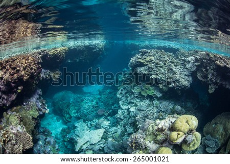 Corals create rugged surface area along the coast of the Solomon Islands. This area is part of the Coral Triangle and known for its marine biodiversity. It offers beautiful diving and snorkeling. - stock photo