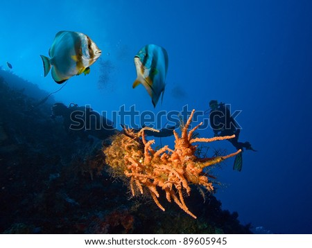 Corals, fishes and divers - stock photo