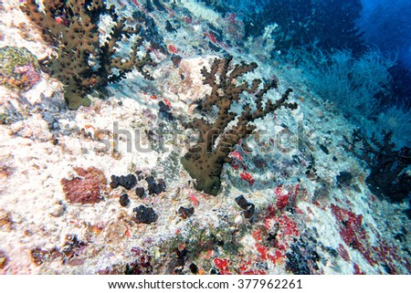 corals growing on Ship Wreck underwater while diving - stock photo