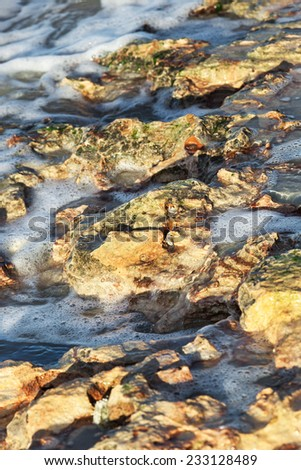 corals on the sea shore on a sunny day - stock photo