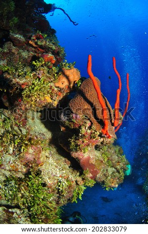 Corals on the Wall, Grand Cayman - stock photo