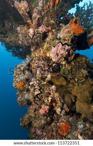 Corals, sponges, and clams on the mast of Iro, a Japanese Navy fleet oiler that was sunk after being torpedoed by a US submarine during WWII.  The vessel rests off the islands of Palau in Micronesia. - stock photo
