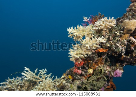 Corals, sponges, and clams on the mast of the Iro, a 462 foot (140m)Japanese Navy fleet oiler that was was sunk on March 31, 1944. The vessel rests in the waters off the islands of Palau, Micronesia. - stock photo