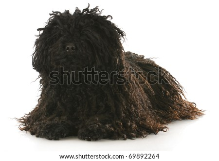 corded puli laying down with reflection on white background - stock photo