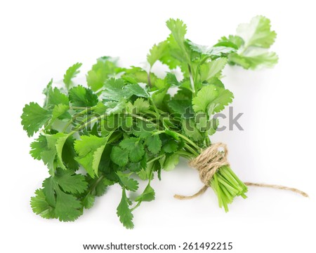 Coriander bunch isolated on white - stock photo