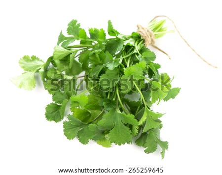 Coriander  fresh greens  cilantro  cilantroisolated on the white - stock photo
