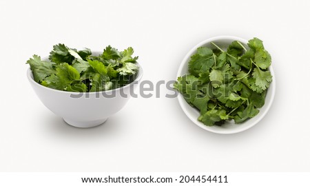 coriander isolated on white background, view from front and top. - stock photo