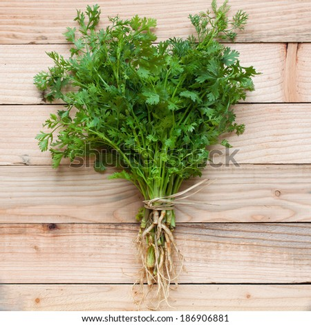 coriander leaves - stock photo