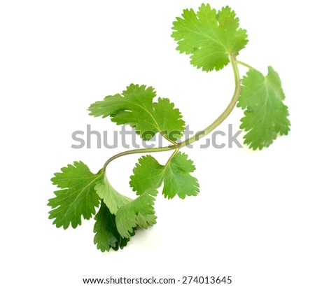 Coriander leaves isolated on white background, closeup - stock photo