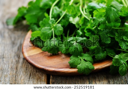 coriander on a dark wood background. tinting. selective focus - stock photo