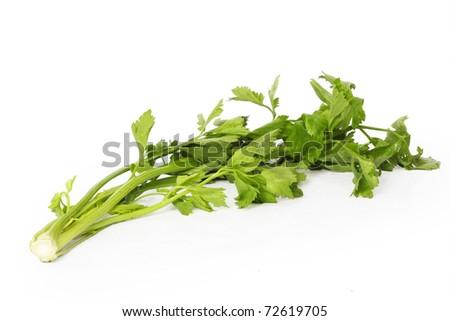 Coriander on white background - stock photo