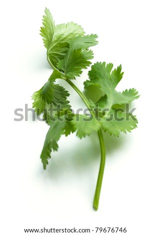 coriander or cilantro isolated on white background - stock photo