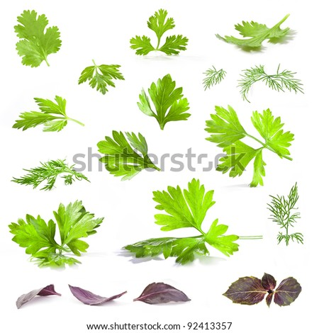 Coriander, parsley, dill and basil leaves isolated on white background - closeup. - stock photo