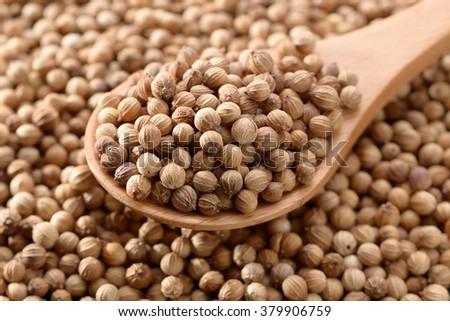 coriander seed - stock photo