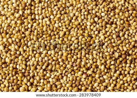 Coriander seeds background - stock photo