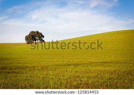 Cork Tree in Alentejo - stock photo