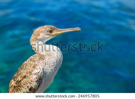 Cormorant on a background of water on Ibiza island, Spain