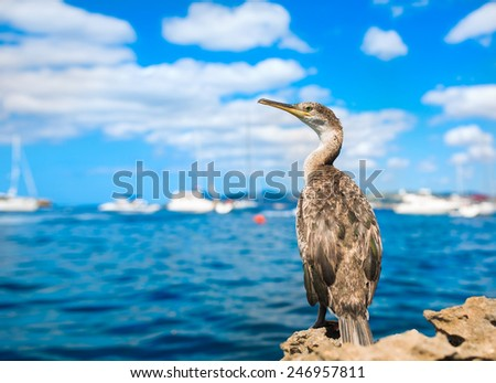 Cormorant sitting on a background of blue sky, sea and boats. Ibiza, Spain