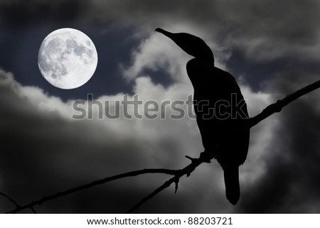 cormorant with full moon
