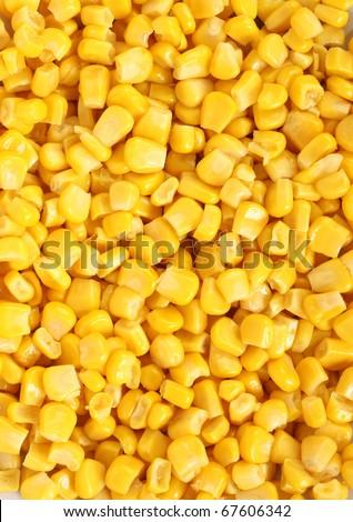 corn background - stock photo