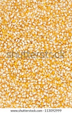 Corn beans background on white. - stock photo