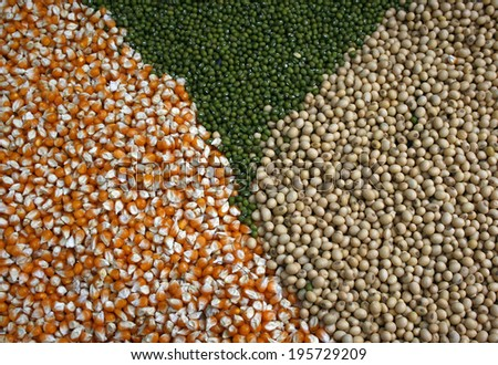 corn beans, green beans and soybeans