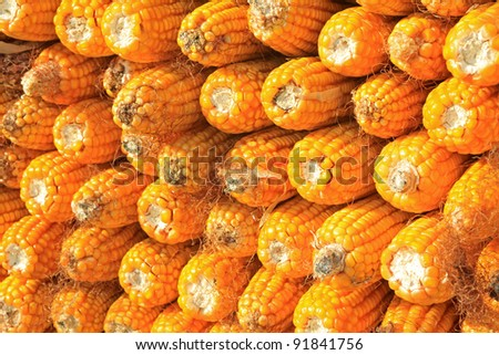 corn bonzi material in China rural