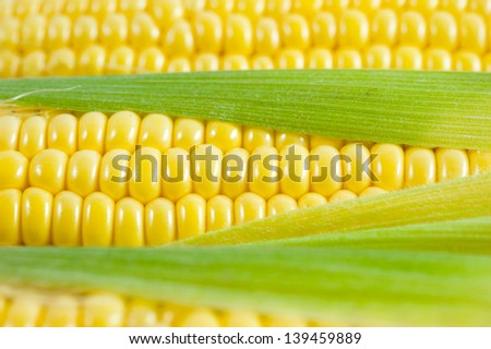corn cob  - stock photo
