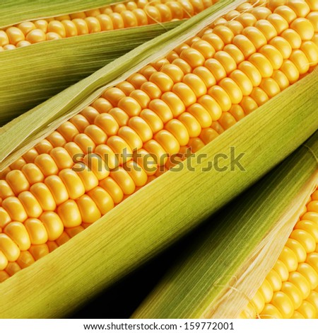 corn cob between green leaves - stock photo