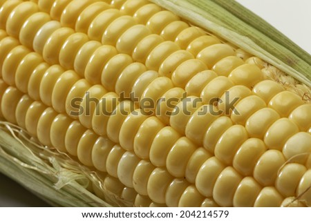 Corn cob on white background. - stock photo