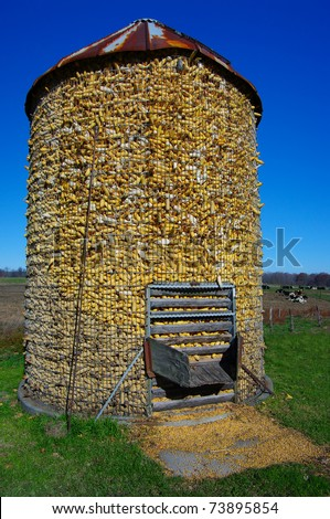 Corn Crib: A wire mesh corn storage bin is filled to the top after fall harvest. - stock photo