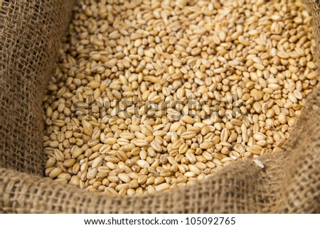 Corn crop  in sack. Ready for animal feed - stock photo