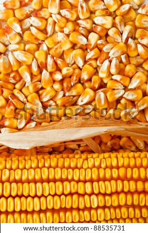 Corn ear on top of corn kernels, top view - stock photo