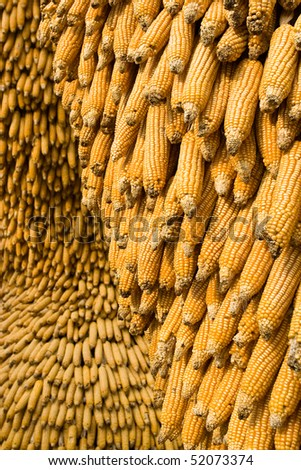 Corn ears in an amusement park .