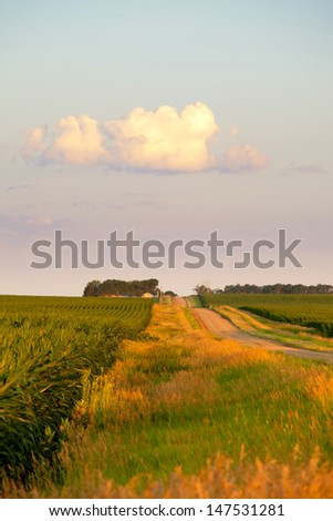 corn field and road at dawn in south dakota, usa - stock photo