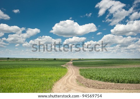 corn field by the road - stock photo